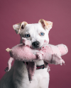 Sophia-Bush-dog-Frankie_001.png